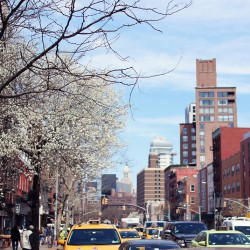 my new york spring snapshots